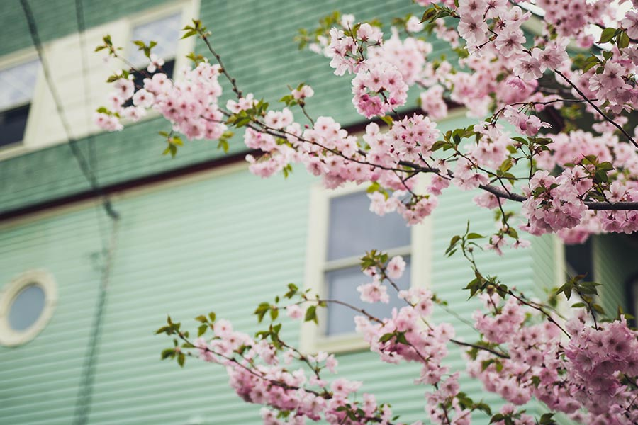 spring gardening melbourne