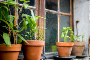 How to Care for Your Container Garden